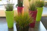 Les plantes idéales pour rendre plus agréable un bureau